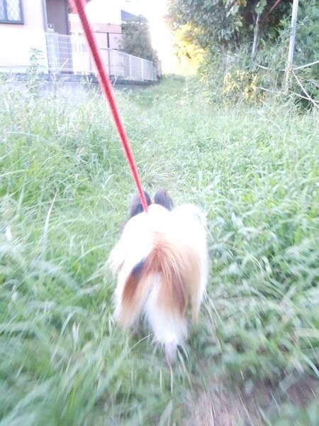 2011_09_07 お散歩DSCN1139