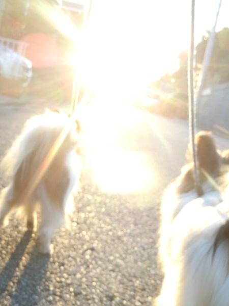 2011_09_07 お散歩DSCN1145