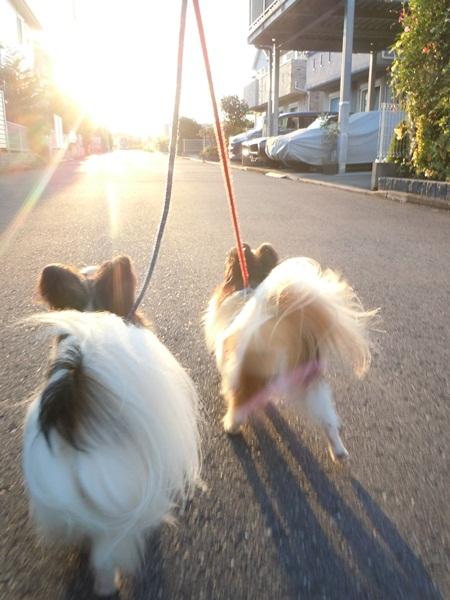 2011_09_07 お散歩DSCN1142
