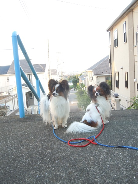 2011_09_07 お散歩DSCN1140