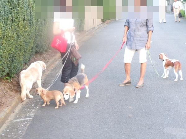 2011_09_07 お散歩DSCN1157