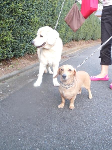 2011_09_07 お散歩DSCN1148