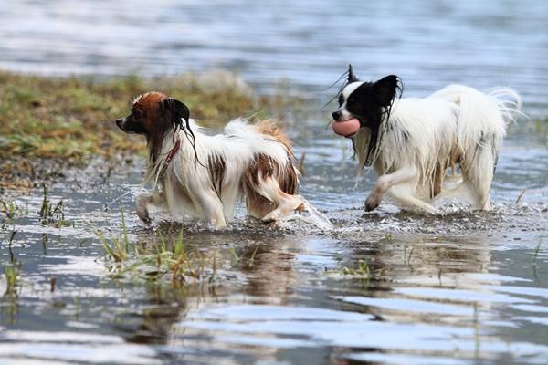 2011_09_14 西湖で水遊び ブログ用2011_09_14 西湖で水遊びDPP_0180