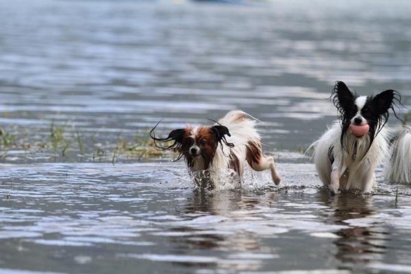 2011_09_14 西湖で水遊び ブログ用2011_09_14 西湖で水遊びDPP_0177