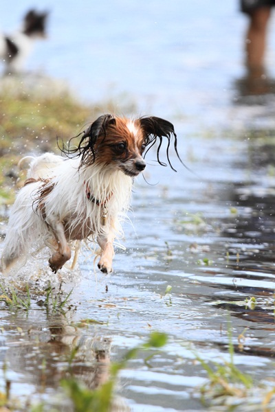 2011_09_14 西湖で水遊び ブログ用2011_09_14 西湖で水遊びDPP_0229