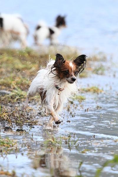 2011_09_14 西湖で水遊び ブログ用2011_09_14 西湖で水遊びDPP_0228