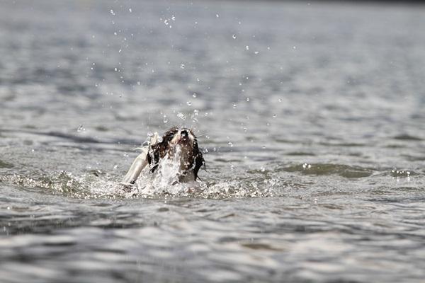 2011_09_14 西湖で水遊び ブログ用2011_09_14 西湖で水遊びDPP_0060