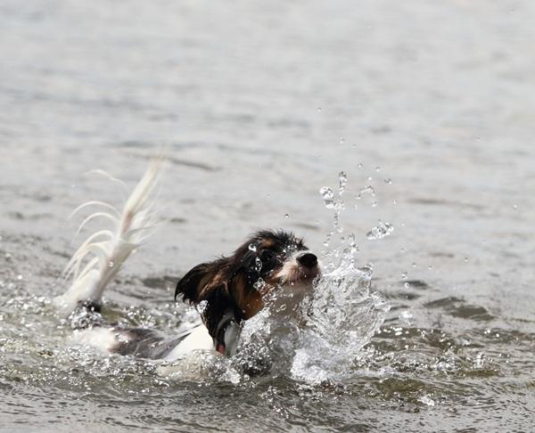 2011_09_14 西湖で水遊び ブログ用2011_09_14 西湖で水遊びDPP_0054