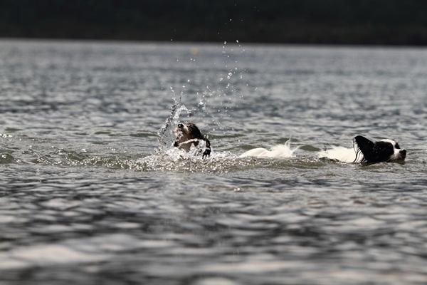 2011_09_14 西湖で水遊び ブログ用2011_09_14 西湖で水遊びDPP_0058