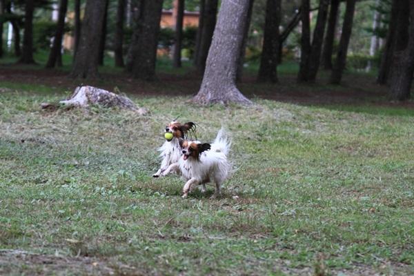2011_09_14 西湖で水遊び ブログ用2011_09_14 西湖で水遊びDPP_0456