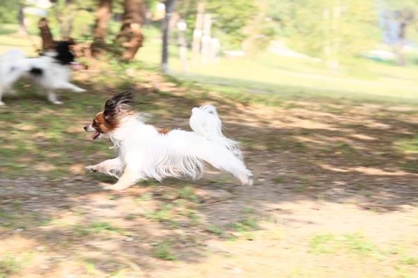 2011_09_14 西湖で水遊び ブログ用2011_09_14 西湖で水遊びDPP_0471