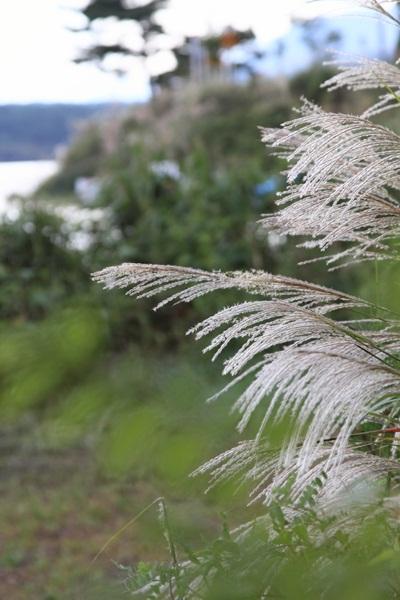 2011_09_14 西湖で水遊び ブログ用2011_09_14 西湖で水遊びDPP_0446