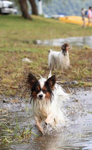 2011_09_14 西湖で水遊び ブログ用2011_09_14 西湖で水遊びDPP_0253