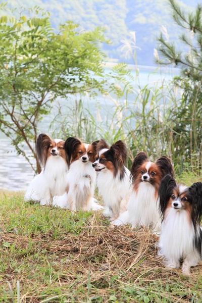 2011_09_14 西湖で水遊び ブログ用2011_09_14 西湖で水遊びDPP_0336