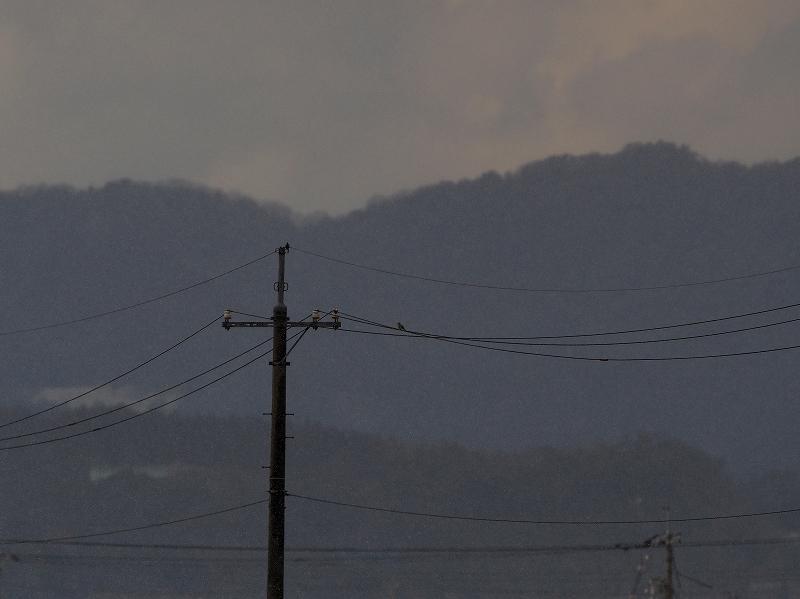 oomozu 13.01.04mc