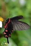蝶の写真へ