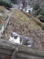 江ノ島猫縮小3