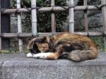 江ノ島猫縮小4