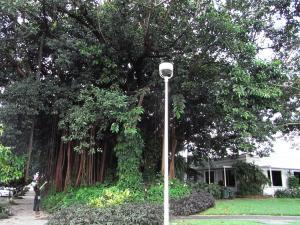 ケアンズ街路樹縮小