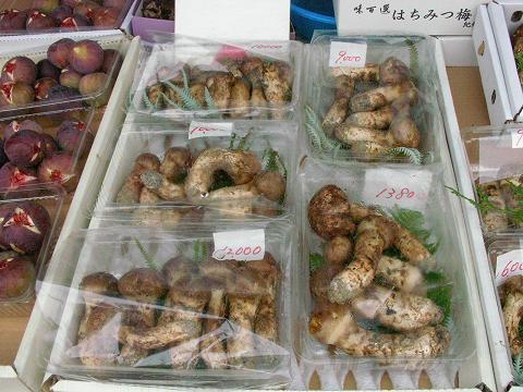 マツタケ 001