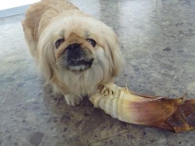 筍犬IMG0004