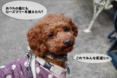 akao4_convert_20130218162930.jpg