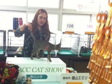 honny cat show
