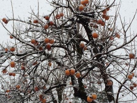 2013-12-12残り柿