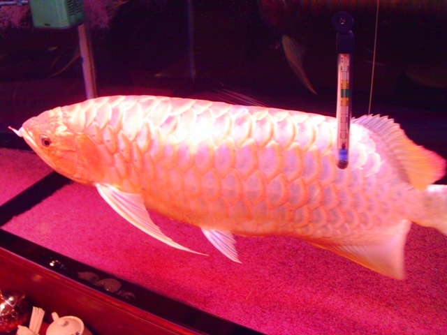 bananafish.jpg