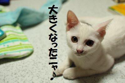 2010_0726_204515-DSC_0004.jpg