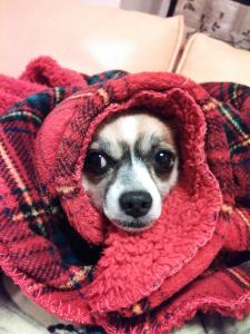 毛布ろいくん