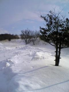 雪の中で松と仲間