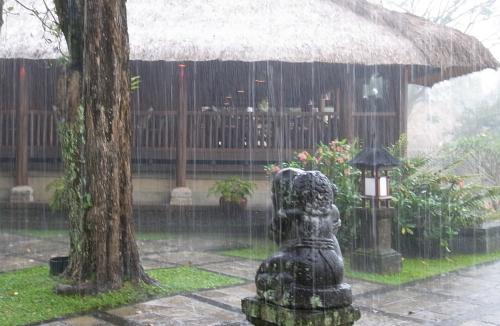 アマン雨1