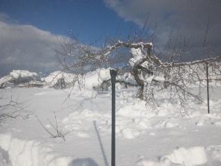 雪の深さ後