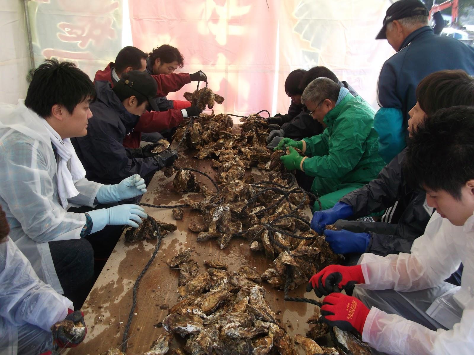 唐桑海の体験センター 牡蠣むき