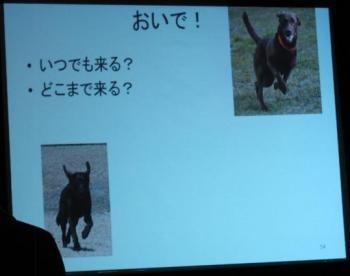 犬のしつけ講座022