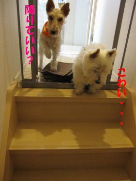 階段マット005