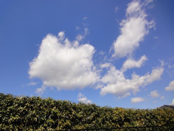 青い空2_convert_20110309125824