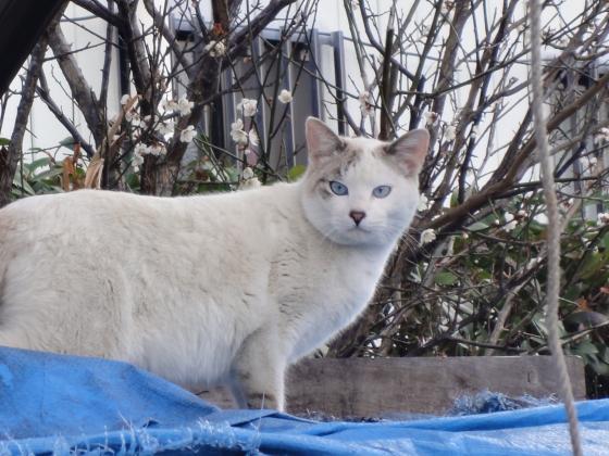 2匹の猫2_convert_20110309125457