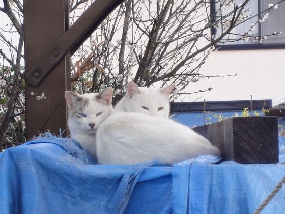 2匹の猫_convert_20110309125420