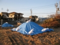 H26.1.13堆肥にブルーシート被せ@IMG_0549