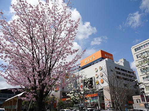 1204sakura001.jpg