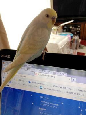 パソコンにとまる