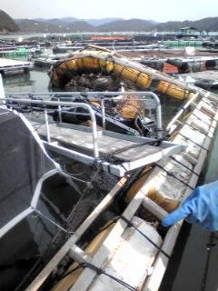 養殖筏被害