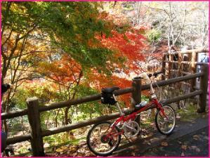 紅葉 高萩市花貫渓谷