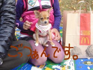 snap_akiyu2_2010112132912.jpg