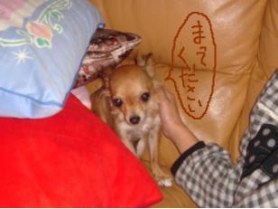 snap_akiyu2_2010114123633.jpg