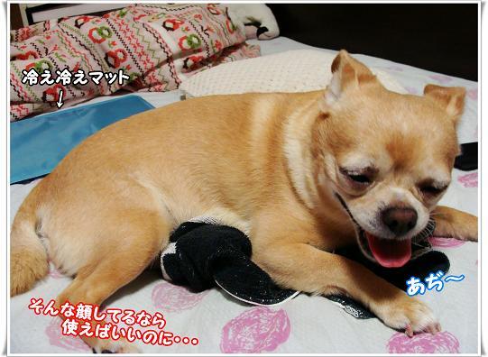 046SONNAKAO.jpg