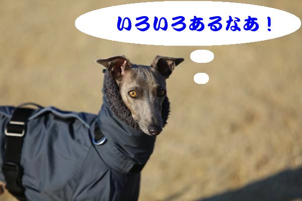 IMG_8834−1_convert_20140123194253