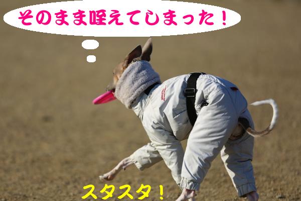 IMG_8811−1_convert_20140123195023